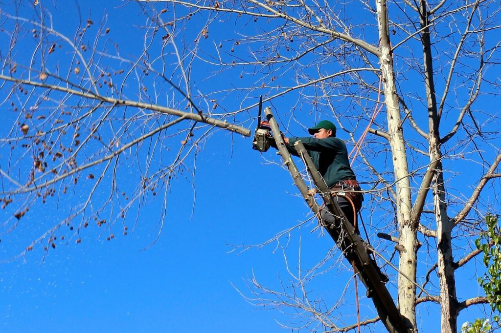 Contact Us-North Lauderdale FL Tree Trimming and Stump Grinding Services-We Offer Tree Trimming Services, Tree Removal, Tree Pruning, Tree Cutting, Residential and Commercial Tree Trimming Services, Storm Damage, Emergency Tree Removal, Land Clearing, Tree Companies, Tree Care Service, Stump Grinding, and we're the Best Tree Trimming Company Near You Guaranteed!