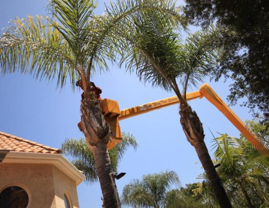 Palm Tree Trimming-North Lauderdale FL Tree Trimming and Stump Grinding Services-We Offer Tree Trimming Services, Tree Removal, Tree Pruning, Tree Cutting, Residential and Commercial Tree Trimming Services, Storm Damage, Emergency Tree Removal, Land Clearing, Tree Companies, Tree Care Service, Stump Grinding, and we're the Best Tree Trimming Company Near You Guaranteed!