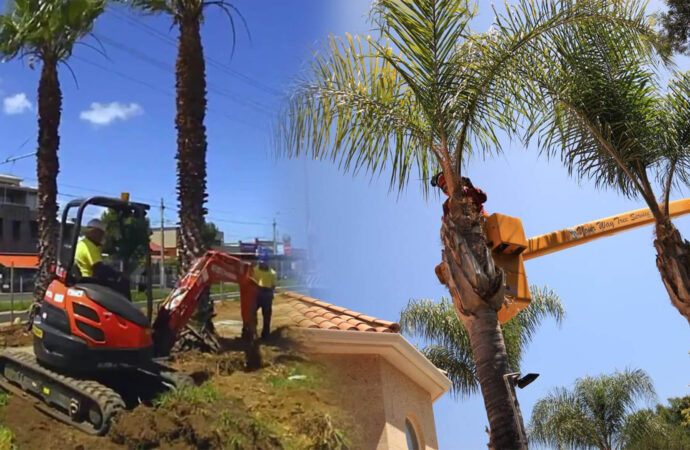Palm tree trimming & palm tree removal-North Lauderdale FL Tree Trimming and Stump Grinding Services-We Offer Tree Trimming Services, Tree Removal, Tree Pruning, Tree Cutting, Residential and Commercial Tree Trimming Services, Storm Damage, Emergency Tree Removal, Land Clearing, Tree Companies, Tree Care Service, Stump Grinding, and we're the Best Tree Trimming Company Near You Guaranteed!