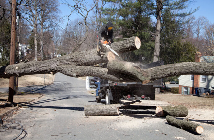 Residential Tree Services-North Lauderdale FL Tree Trimming and Stump Grinding Services-We Offer Tree Trimming Services, Tree Removal, Tree Pruning, Tree Cutting, Residential and Commercial Tree Trimming Services, Storm Damage, Emergency Tree Removal, Land Clearing, Tree Companies, Tree Care Service, Stump Grinding, and we're the Best Tree Trimming Company Near You Guaranteed!