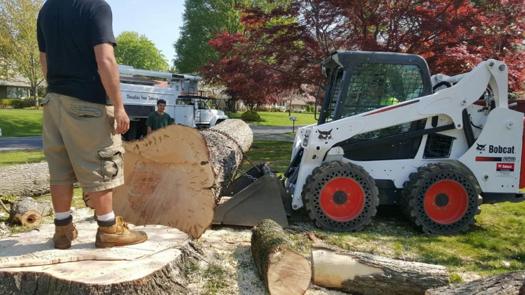 Services-North Lauderdale FL Tree Trimming and Stump Grinding Services-We Offer Tree Trimming Services, Tree Removal, Tree Pruning, Tree Cutting, Residential and Commercial Tree Trimming Services, Storm Damage, Emergency Tree Removal, Land Clearing, Tree Companies, Tree Care Service, Stump Grinding, and we're the Best Tree Trimming Company Near You Guaranteed!