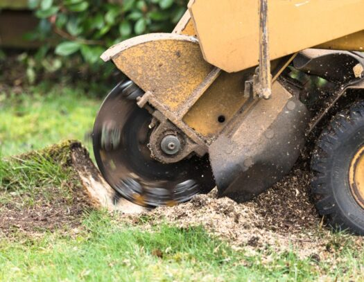 Stump Grinding-North Lauderdale FL Tree Trimming and Stump Grinding Services-We Offer Tree Trimming Services, Tree Removal, Tree Pruning, Tree Cutting, Residential and Commercial Tree Trimming Services, Storm Damage, Emergency Tree Removal, Land Clearing, Tree Companies, Tree Care Service, Stump Grinding, and we're the Best Tree Trimming Company Near You Guaranteed!