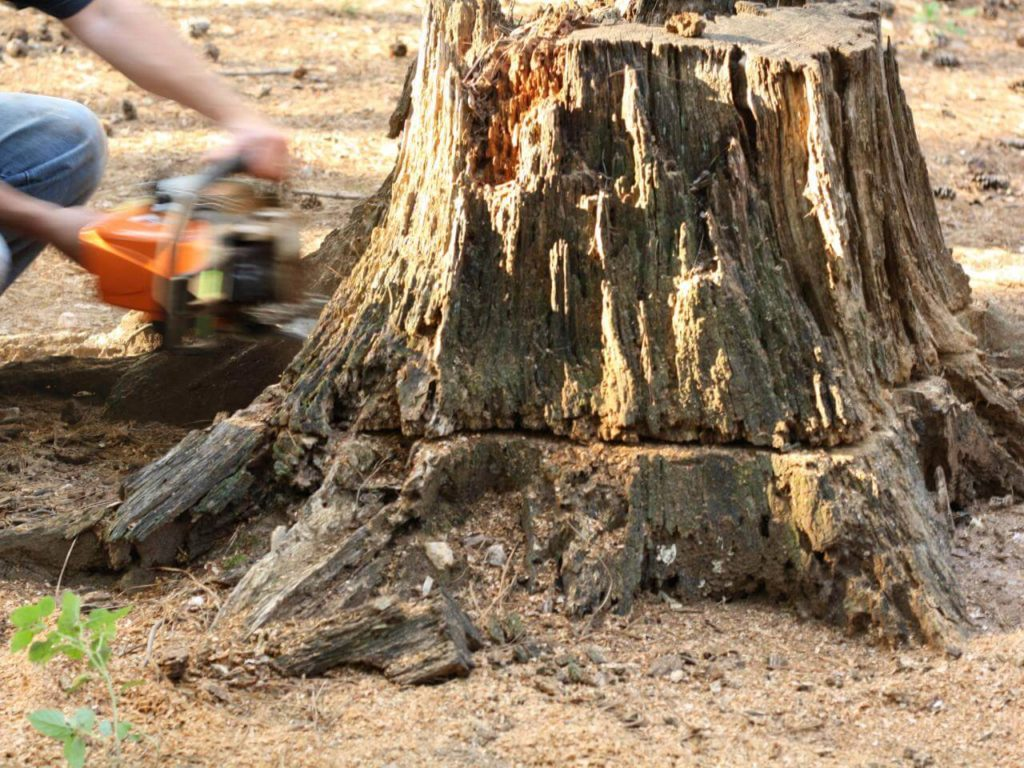Stump Removal-North Lauderdale FL Tree Trimming and Stump Grinding Services-We Offer Tree Trimming Services, Tree Removal, Tree Pruning, Tree Cutting, Residential and Commercial Tree Trimming Services, Storm Damage, Emergency Tree Removal, Land Clearing, Tree Companies, Tree Care Service, Stump Grinding, and we're the Best Tree Trimming Company Near You Guaranteed!