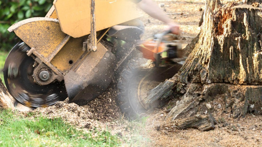 Stump grinding & removal-North Lauderdale FL Tree Trimming and Stump Grinding Services-We Offer Tree Trimming Services, Tree Removal, Tree Pruning, Tree Cutting, Residential and Commercial Tree Trimming Services, Storm Damage, Emergency Tree Removal, Land Clearing, Tree Companies, Tree Care Service, Stump Grinding, and we're the Best Tree Trimming Company Near You Guaranteed!