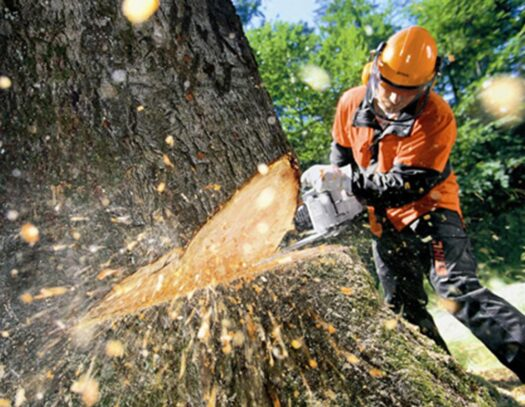 Tree Cutting-North Lauderdale FL Tree Trimming and Stump Grinding Services-We Offer Tree Trimming Services, Tree Removal, Tree Pruning, Tree Cutting, Residential and Commercial Tree Trimming Services, Storm Damage, Emergency Tree Removal, Land Clearing, Tree Companies, Tree Care Service, Stump Grinding, and we're the Best Tree Trimming Company Near You Guaranteed!