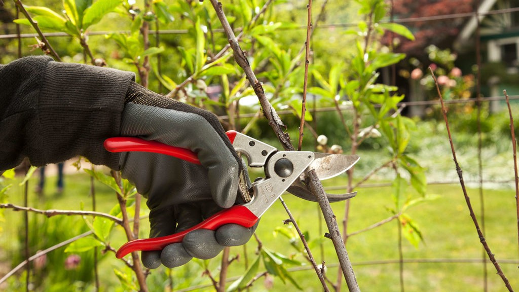 Tree Pruning-North Lauderdale FL Tree Trimming and Stump Grinding Services-We Offer Tree Trimming Services, Tree Removal, Tree Pruning, Tree Cutting, Residential and Commercial Tree Trimming Services, Storm Damage, Emergency Tree Removal, Land Clearing, Tree Companies, Tree Care Service, Stump Grinding, and we're the Best Tree Trimming Company Near You Guaranteed!