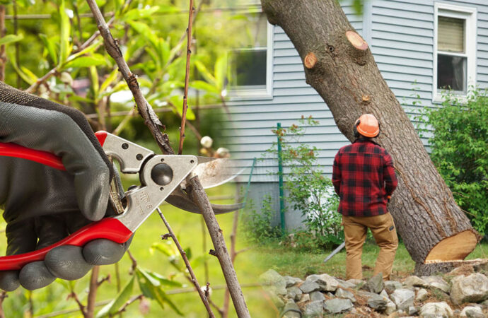 Tree pruning & tree removal-North Lauderdale FL Tree Trimming and Stump Grinding Services-We Offer Tree Trimming Services, Tree Removal, Tree Pruning, Tree Cutting, Residential and Commercial Tree Trimming Services, Storm Damage, Emergency Tree Removal, Land Clearing, Tree Companies, Tree Care Service, Stump Grinding, and we're the Best Tree Trimming Company Near You Guaranteed!
